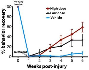 Post injury recovery diagram graphic