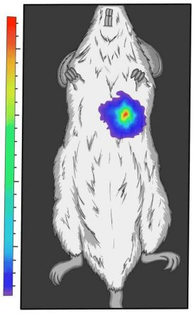 Preclinical image of mouse graphic